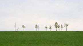 Spring green field with trees Stock Images
