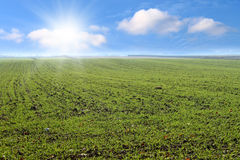 Spring green fields. Stock Photography