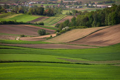 Spring green fields. Spring fields on rolling terrain in the south of Polish Stock Images
