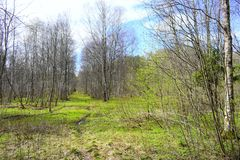 Spring green forest and marshland. In the lowland forest all filled up with water. At the top of the forest everything turns green royalty free stock photography