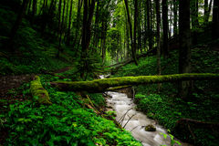Spring Green Forest Royalty Free Stock Images