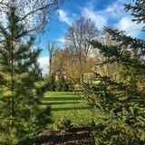Spring in the green garden with the sun, blue sky and white clouds. Garden and park greenery with conifers and ornamental shrubs and trees Royalty Free Stock Photo