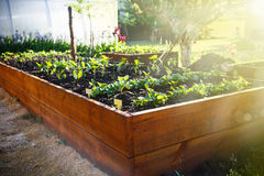 Spring green garden in a wooden box Royalty Free Stock Image