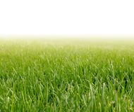Spring green grass Royalty Free Stock Photos