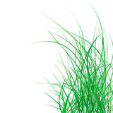 Spring green grass. On a white background Royalty Free Stock Photography