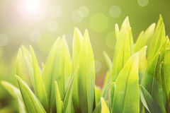 Spring green grass Royalty Free Stock Image