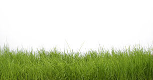 Spring green grass. Green grass isolated over white Stock Photography