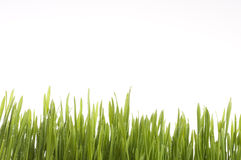 Spring green grass background. Royalty Free Stock Photos
