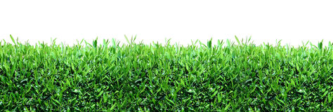Spring, green grass background Stock Images