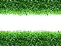 Spring, green grass background
