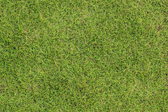 Spring green grass background. Close-up image of fresh spring green grass stock photography