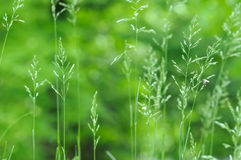 Spring green grass background Stock Photography