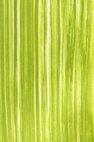 Spring green grass background painted with gouache Stock Images