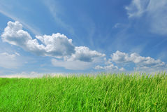 Spring green grass on blue sky Stock Images