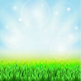 Spring green grass. Blue sky and sunshine Stock Images