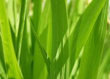 Spring green grass covered by sun Royalty Free Stock Photos