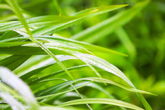 Spring green grass with dew Royalty Free Stock Photo