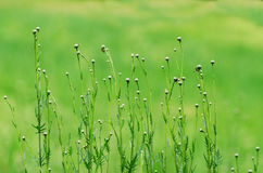 Spring green grass and flowers background Stock Image