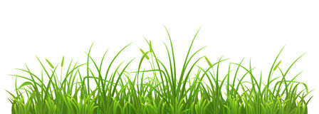 Spring green grass. Fresh green grass on white background, vector illustration Royalty Free Stock Photography