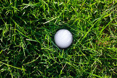 Spring green grass and golf ball. Background of spring green grass and golf ball Royalty Free Stock Photo