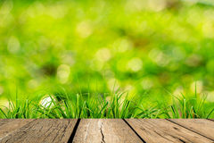 Spring green grass with green bokeh Royalty Free Stock Image