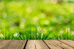 Spring green grass with green bokeh and sunlight Royalty Free Stock Image