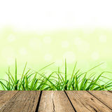 Spring green grass with green bokeh Stock Photo