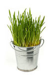 Spring green grass growing in bucket over white Royalty Free Stock Photos