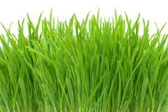 Spring green grass isolated on white Stock Photos