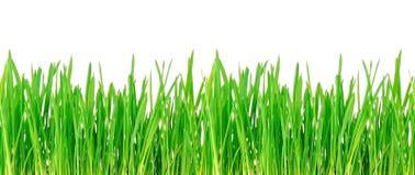 Seamless grass texture. Royalty Free Stock Photo