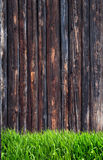 Spring green grass and leaf plant over wood fence background Stock Image