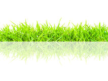 Spring green grass seamless border Stock Photography