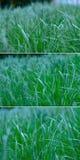 Spring green grass Stock Photos