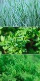 Spring green grass Stock Photo