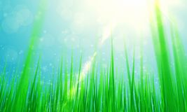 Spring green grass and sun Royalty Free Stock Images