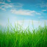 Spring green grass Stock Image
