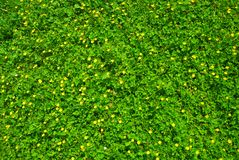 Spring green grass texture with flowers royalty free stock images