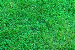 Spring green grass texture stock photography