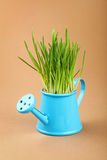 Spring green grass in watering pot over brown Stock Photos