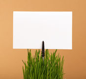 Spring green grass and white paper sign over brown. Fresh spring green grass with white paper card sign copy space, close up over brown kraft paper parchment Royalty Free Stock Image