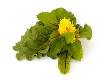 Spring green herbs. On white background Royalty Free Stock Photos
