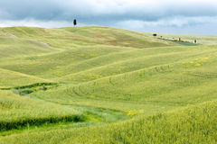 Spring green hills in Tuscany Stock Photos