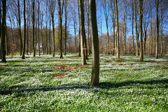 Spring green landscape Royalty Free Stock Images