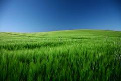Spring green landscape Stock Photos