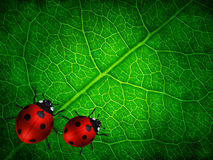 Spring green leaf background with ladybirds Stock Photography