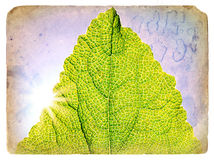 Spring Green Leaf. Old postcard. Royalty Free Stock Photos