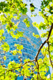 Spring green leafs and Torre Agbar in Barcelona Royalty Free Stock Photo
