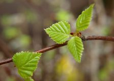 Free Spring Green Leaves Stock Photos - 19520693