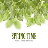 Spring green leaves. Green leaves on white background with copyspace and sample text Royalty Free Stock Image