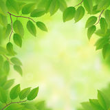 Spring green leaves Royalty Free Stock Photography